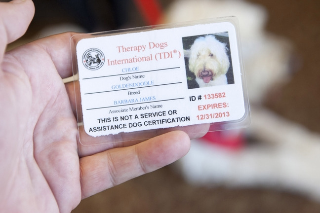 Dignity Health hospitals launch a new therapy dog program   Cover ...