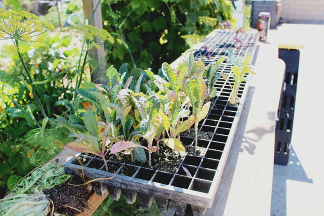 A place to grow: Locals without enough space at home find a plot of ...